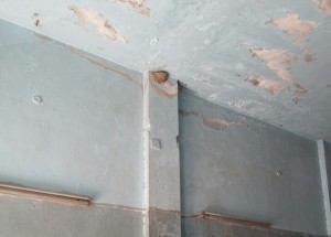 عش طائر السنونو على حائط المحل
