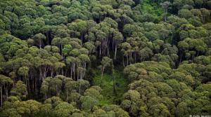 غابات أندونيسيا العذراء